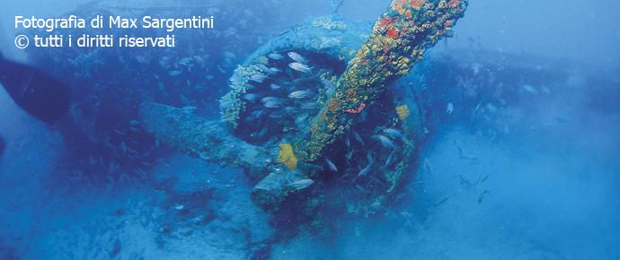 Il fascino dei fondali marini tra fauna, flora e relitti