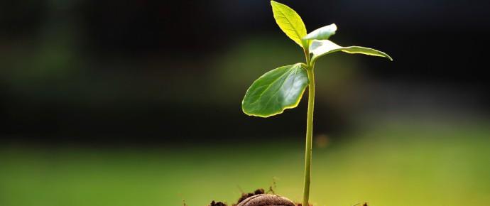 Green economy: Un semino per coltivare la (ri)occupazione